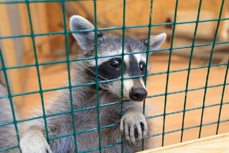 Что стало с контактными зоопарками в Смоленске после их запрета?