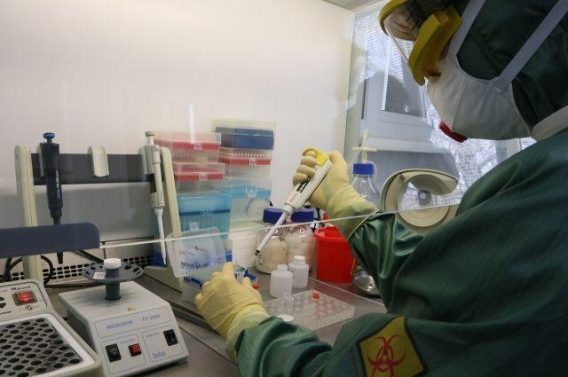 В России замедлился рост числа заражений коронавирусом