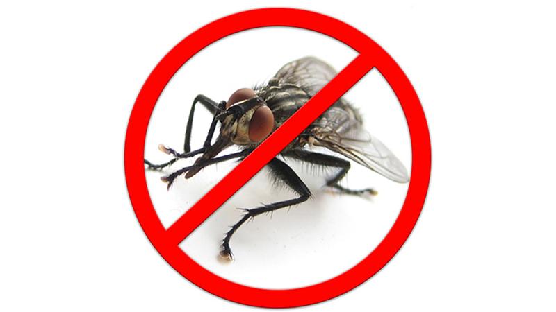 Дезинсекция от мух – компания «Бермуда» на страже вашего здоровья