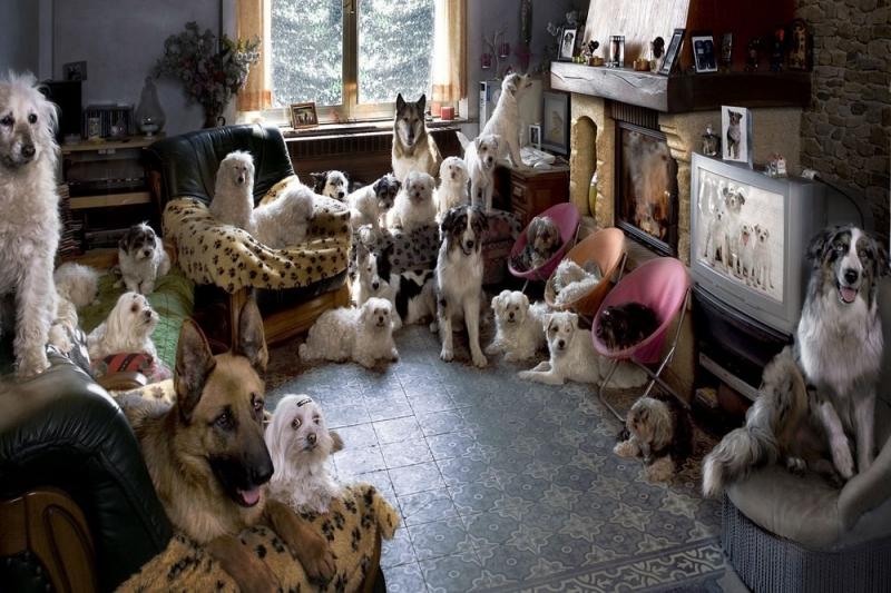 Разведение собак как бизнес