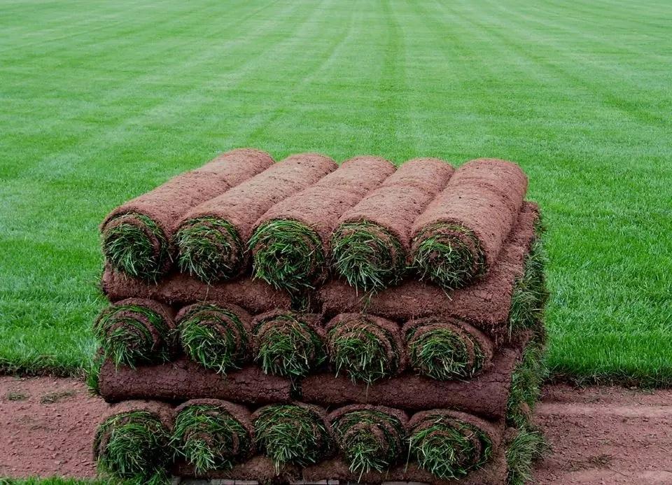 Рулонный газон: красиво, недорого, и участок выглядит великолепно