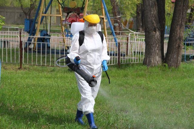 Обработку против клещей проведут в парке «Соловьиная роща» в Смоленске