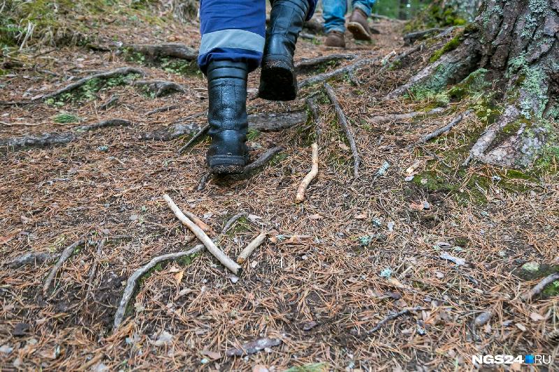 Очень пожилой смолянин пропал в лесу