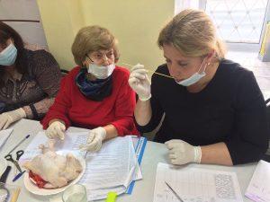 На птичьих правах. В Смоленске эксперты оценили качество куриных тушек