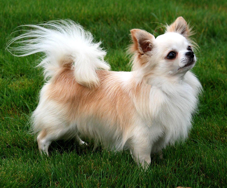 Где смотреть все породы собак с фото и описанием