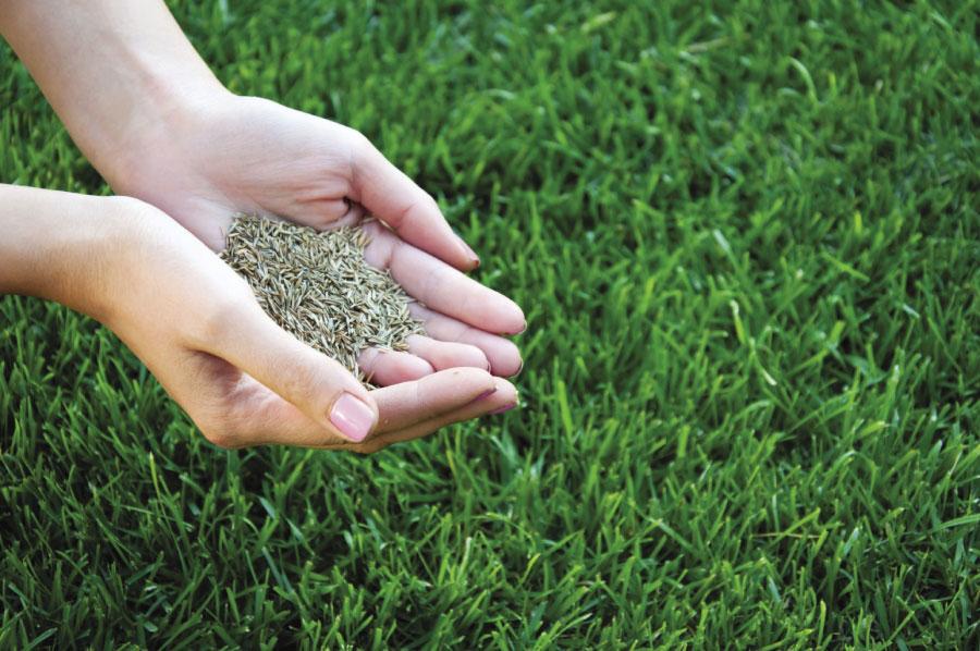 Как правильно садить универсальную газонную травосмесь