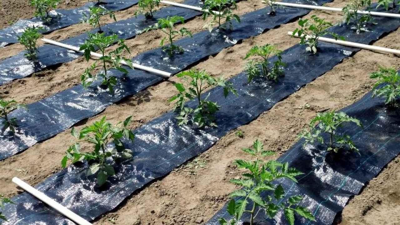 Эффективность применения агроволокна в любое время года