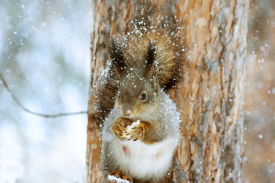 В пятницу в Смоленской области будет снежно и морозно