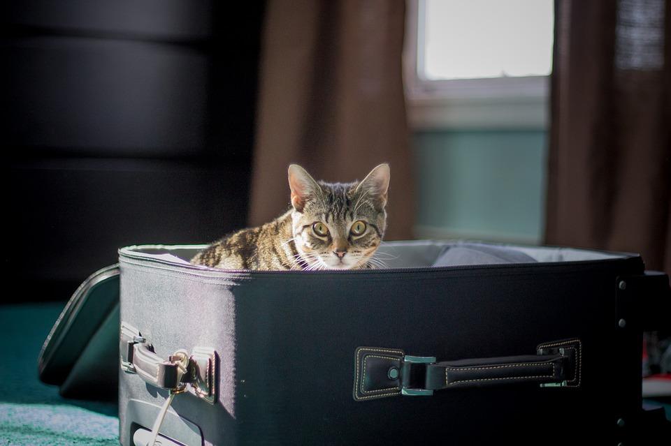 Как подготовить кошку к вашему переезду?