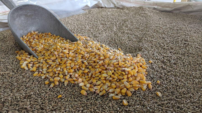 Россельхознадзор попросил Германию приостановить отгрузку кормов и кормовых добавок в РФ