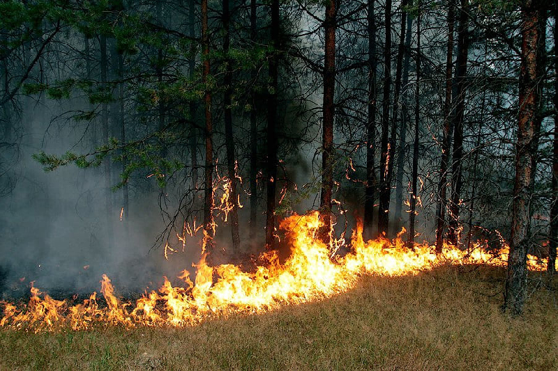 В Смоленской области произошел лесной пожар