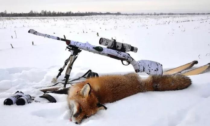 Особенности осенней и зимней охоты на лис